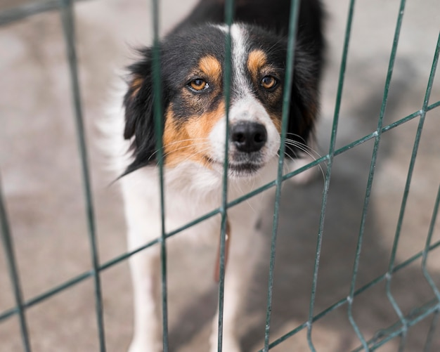 Sad rescue dog behind fence at adoption shelter