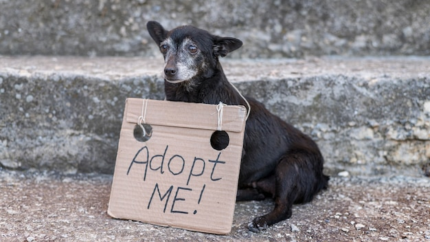 Sad rescue dog with adopt me sign at shelter