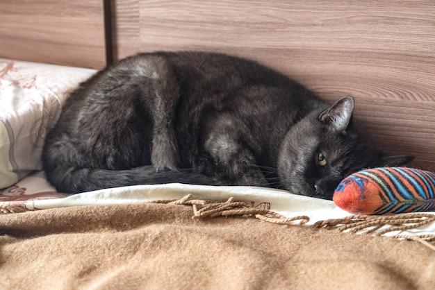 Грустный сонный кот лежит на кровати рядом со своей игрушкой-рыбкой