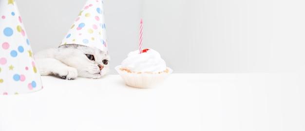 Печальный белый котенок в праздничной шапочке смотрит на торт. день рождения и праздник концепции.