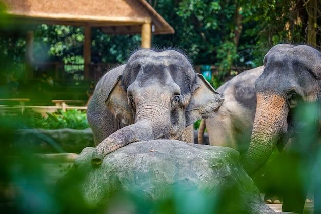 Sad young elephant