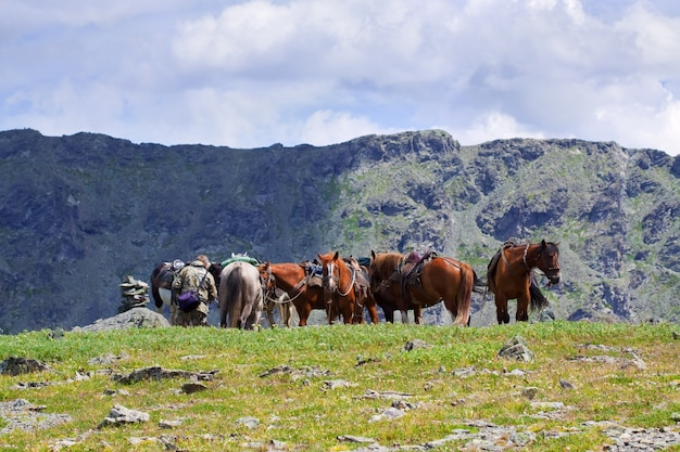 Saddled horses in mountains