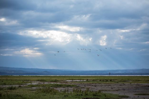 アフリカ、ケニアのナクル国立公園にある車でのサファリ。湖の上を飛んでいるピンクのフラミンゴ