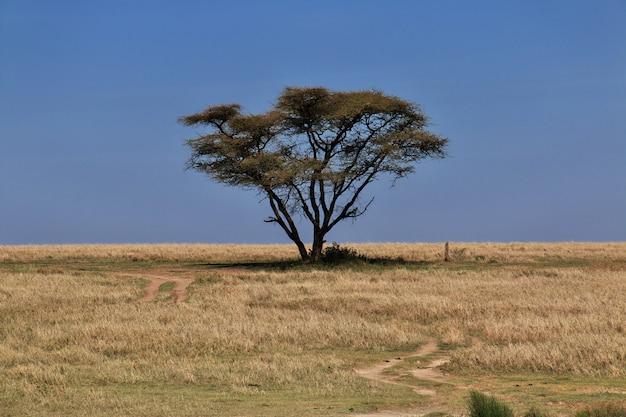 케냐와 탄자니아, 아프리카의 사파리