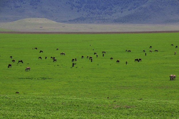 Safari in kenia and tanzania, africa