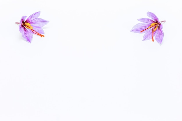 白い背景の上のサフランクロッカスの花。コピースペース。写真の上隅にサフランの花が咲いています。