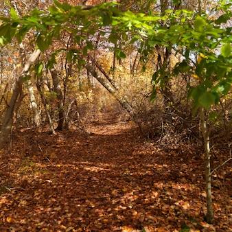 ハンプトンズ、ニューヨーク、サグハーバー、sagaponack rd、the nature conservancy