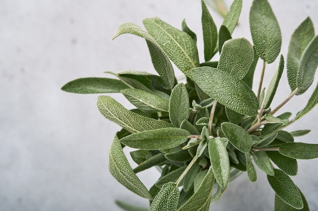 세이지. 신선한 녹색 잎의 무리입니다. 허브 세이 지 추상 질감 배경입니다. 자연 개념입니다. 부드럽고 선택적 초점. 조직. 조롱. copyspace와 상위 뷰입니다.