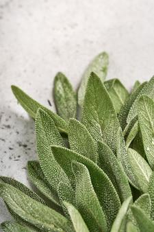 샐비어 신선한 녹색 잎. 허브 세이 지 추상 질감 배경입니다. 자연 개념입니다. 부드럽고 선택적 초점. 조직. 조롱.