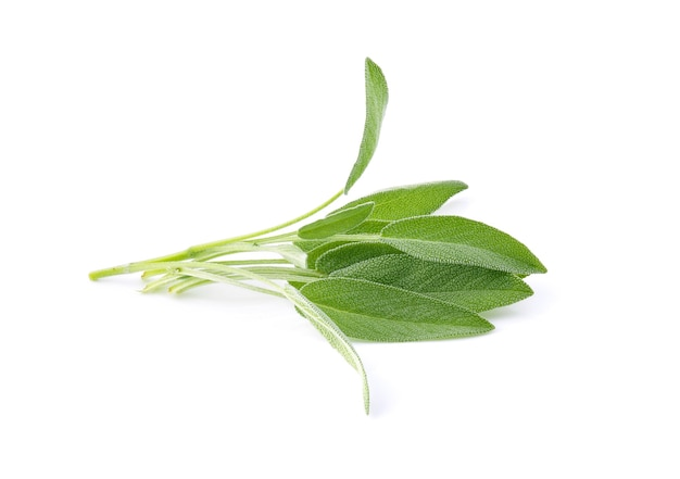 Sage herb leaves bouquet isolated on white