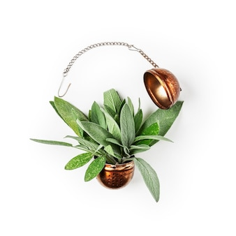Sage herb tea. fresh salvia leaves and tea strainer arrangement isolated on white background clipping path included. herbal medicine concept. top view, flat lay, design element