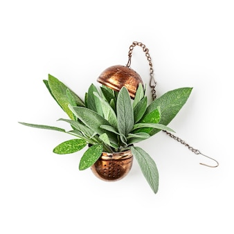 セージハーブティー。新鮮なサルビアの葉と白い背景のクリッピングパスで分離された茶漉しの配置が含まれています。漢方薬の概念。上面図、フラットレイ、デザイン要素