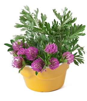 Sagebrush and clover inside flowerpot