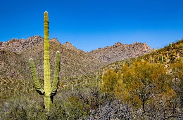 Saguaro cactus in a deserted mountainous area
