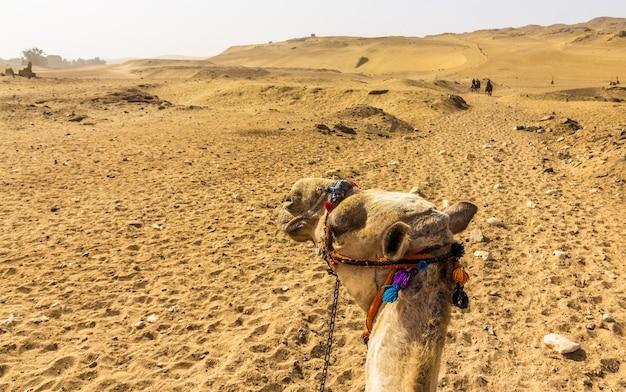 ラクダライダーエジプトから見たサハラ砂漠
