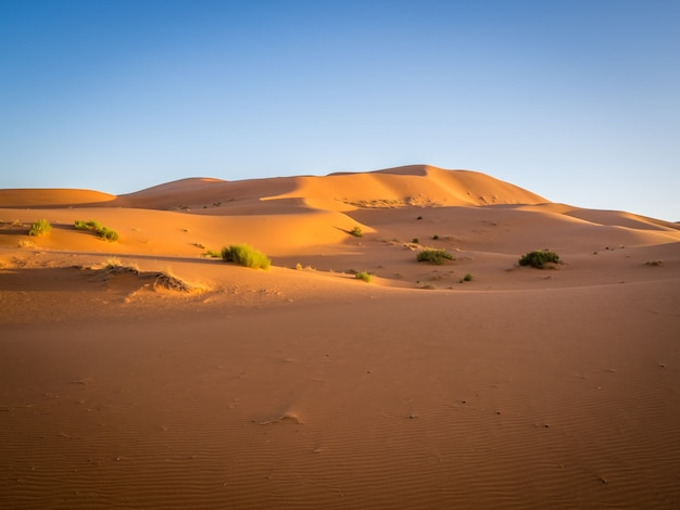 Sahara desert under the sunlight and a blue sky in morocco in africa