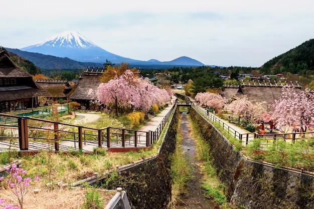 Saiko iyashi no sato with fuji in spring