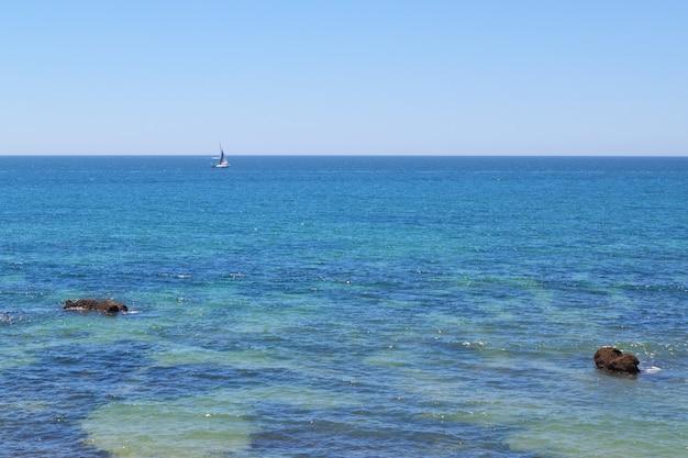 푸른 투명 바다에 돛새치입니다.