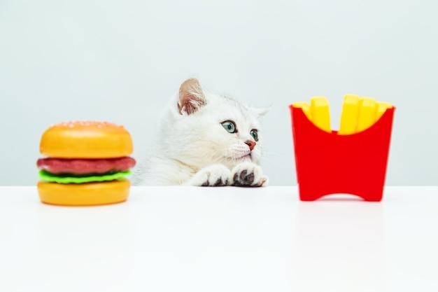 Россия, санкт-петербург. британский белый котенок смотрит на картофель фри и гамбургер. игрушка пластиковая еда.
