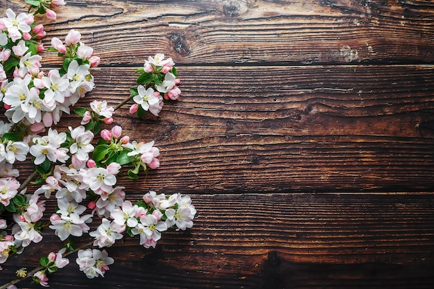 Sakura blooming on dark rustic wood
