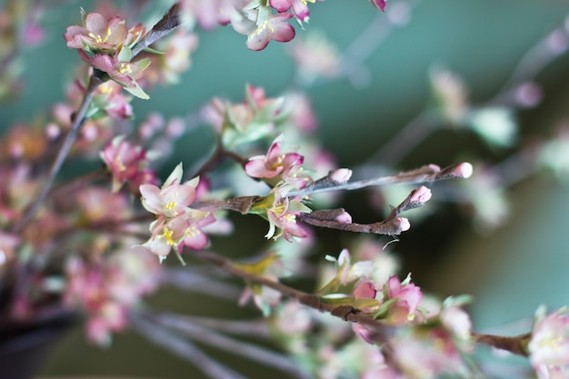 Sakura branch. cherry blossom pink artificial flowers made of silk on a turquoise background
