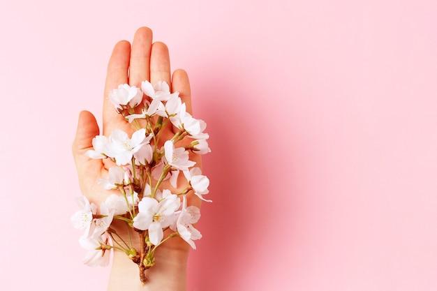 Sakura branch in female hand on pink background