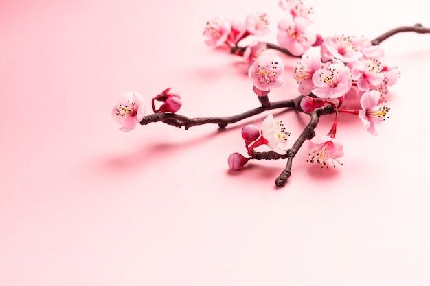 Sakura branch on pink