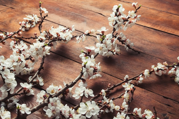 Sakura branches with flowers on a dark wooden surface