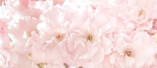 태양 빛에 사쿠라 꽃입니다. 봄 벚꽃의 핑크 꽃입니다. 봄철에 꽃이 있는 배경