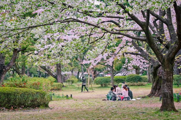 Sakura tree in park