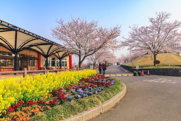 Фотосессия фотографа парка сакуранояма