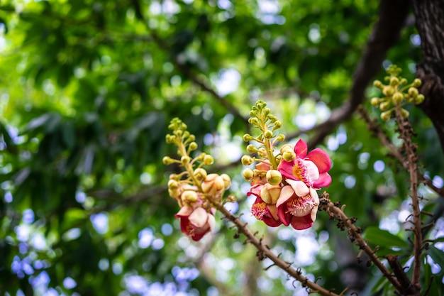 木の上のピンクと黄色のサラソウジュの花びら