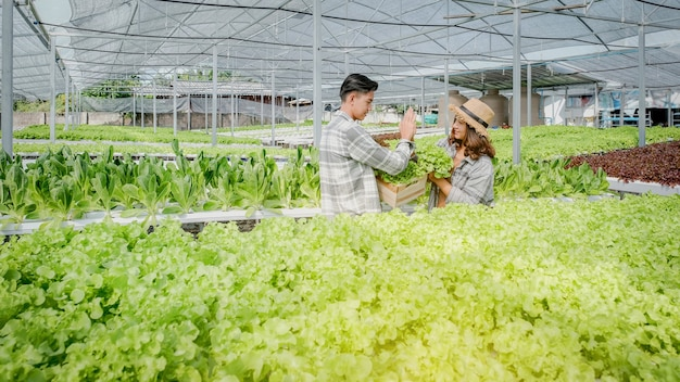 Salad, farmer harvesting lettuce from the hydroponic farm for customers and make hi-five.