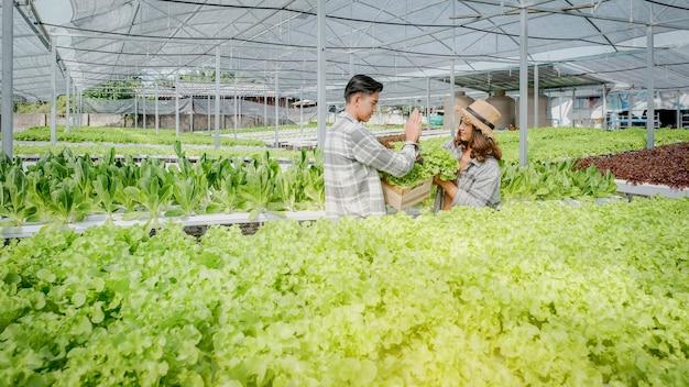 Салат, фермер собирает салат с гидропонной фермы для клиентов и готовит привет-пять.