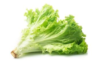 Salad leaf. Lettuce isolated on white background.