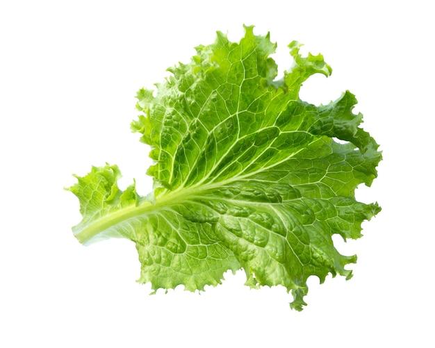 Лист салата. салат, изолированные на белой поверхности.