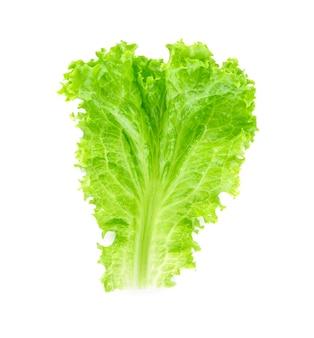 Лист салата. салат на белом.