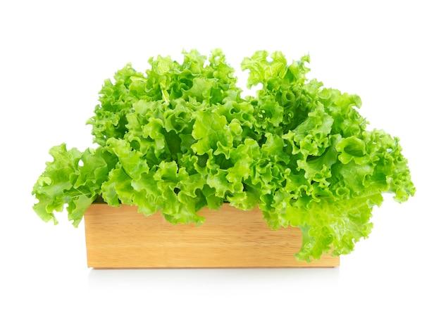 サラダの葉。白地にレタス。