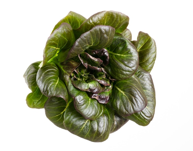 Salad leaves bio lettuce isolated