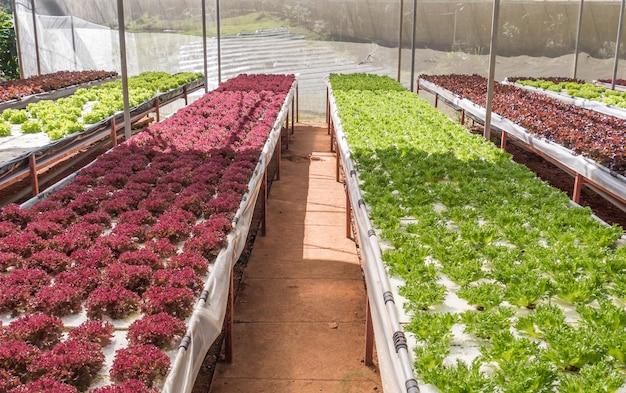 サラダ野菜農園。