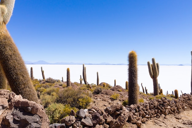 Salar de uyuni view from incahuasi island, bolivia. largest salt flat in the world. bolivian landscape