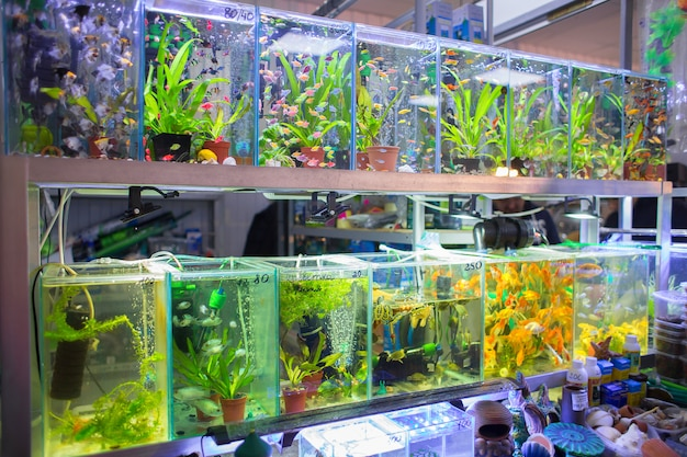 Sale of aquarian small fishes in pet-shop