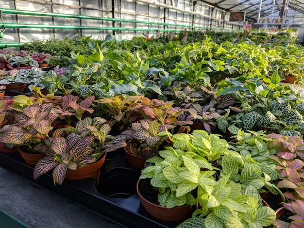 Sale of different flowers in greenhouse