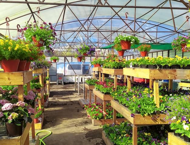 地元の園芸用品センターでの屋内および屋外の植物の販売。