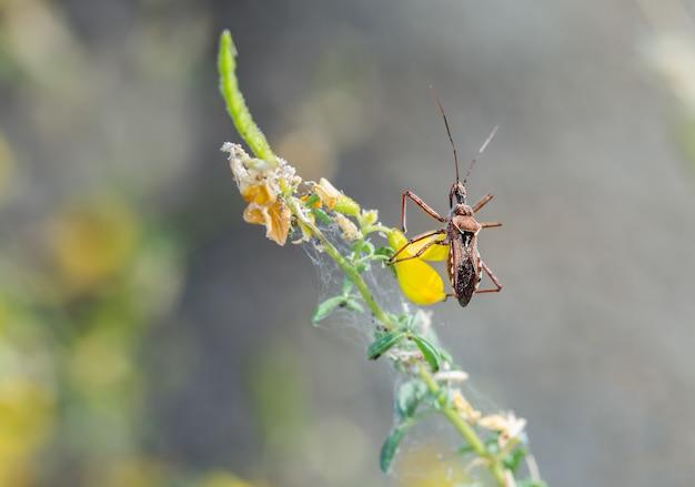 Colpo di messa a fuoco giallastra di un insetto, una specie di assassino e insetti con le zampe di filo