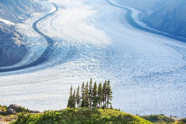 스튜어트, 캐나다의 연어 빙하