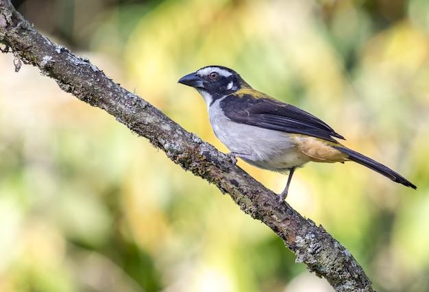 Птица-солитор стоит на ветке