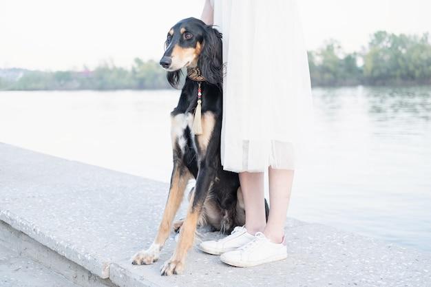 여자 다리 강둑 검정과 갈색 근처에 앉아 saluki 개