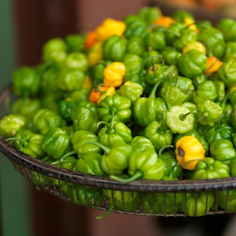 San ignacio, bowl of peppers