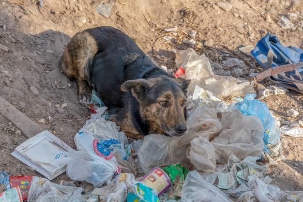 サンラファエル、アルゼンチン、2020年7月30日:ゴミを食べる捨てられた悲しい犬